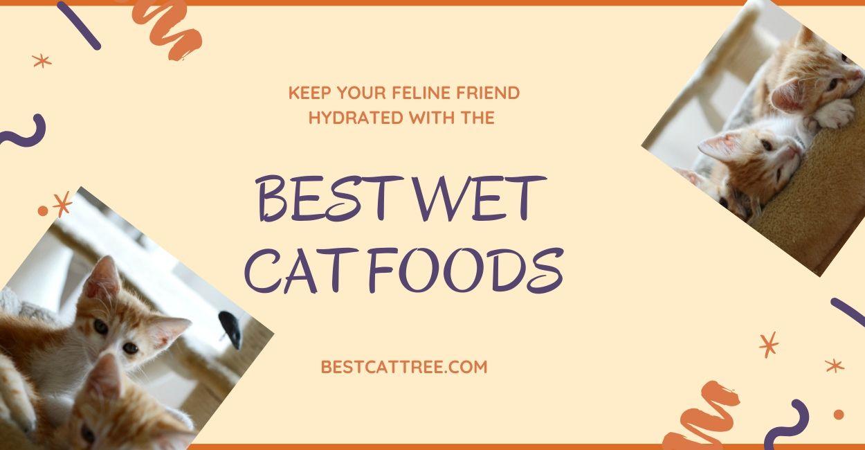 Best-Wet-Cat-Foods