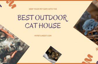 best-outdoor-cat-house