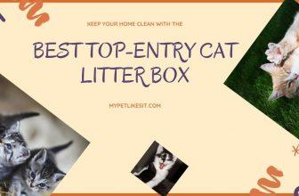 best-top-entry-cat-litter-box
