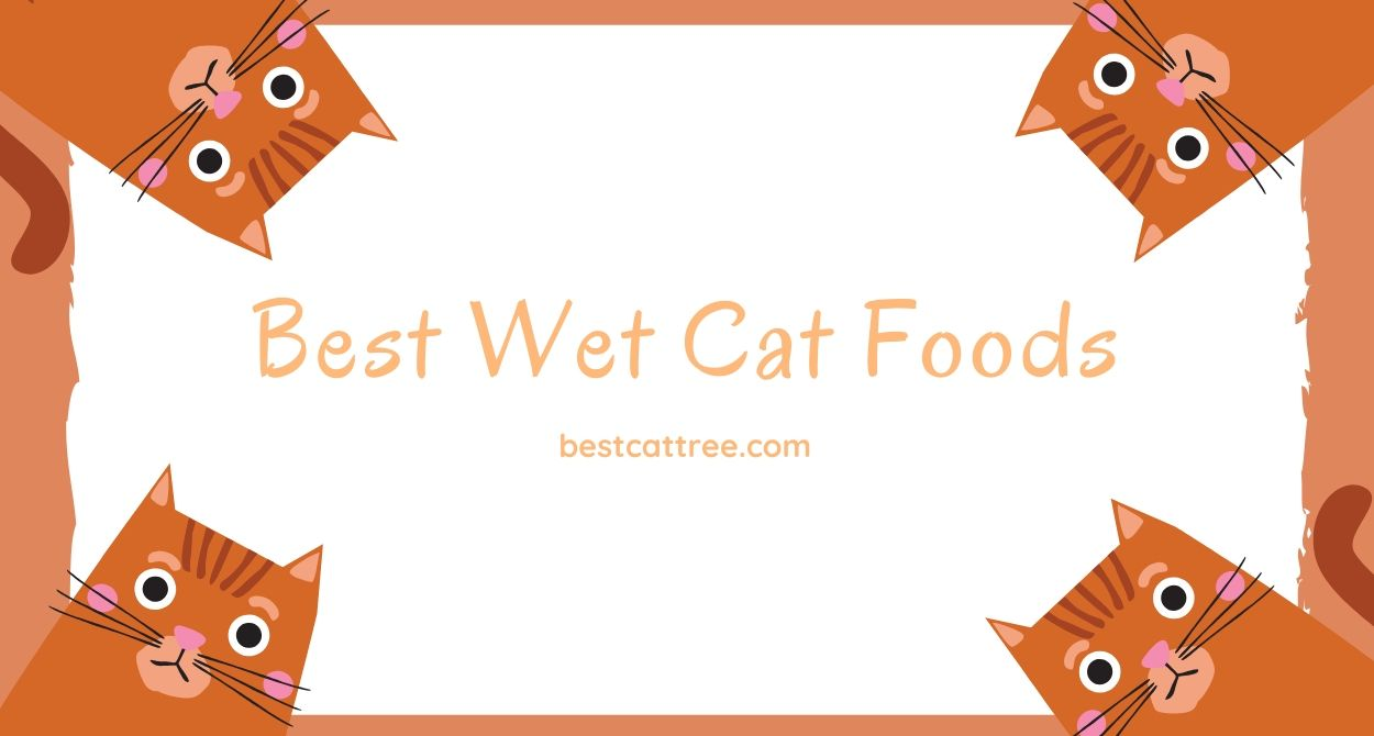 best wet food for cats